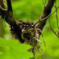 image swcr-robin-in-nest-db-jpg