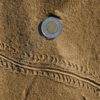 image swcr-centipede-track-in-sand-bds-jpg