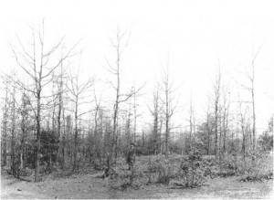 Sand dunes covered in a mixed oak-pine regeneration were considered wastelands at the time.