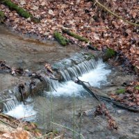 image swcr-creek-in-turkey-point-tract-db-jpg