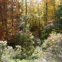 image swcr-fall-colours-bds-jpg