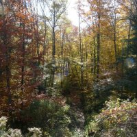 image swcr-wooded-trail-in-fall-bds-jpg