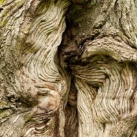 image swcr-tree-knot-db-jpg