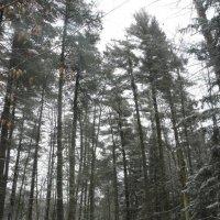 image trail-in-december-eg-jpg