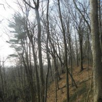 image wooded-slope-in-turkey-point-tract-eg-jpg